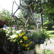 hanging basket tree