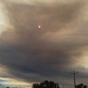 Forest fires return...