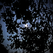 Moon through bunches