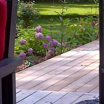 Baby hawk, falcon not sure keeps sitting on my suv and no privacy on deck