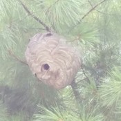 Wasps nest Jeremy noticed