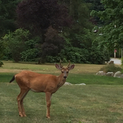 Cooler weather brings the Deer back