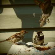 bird bath meeting