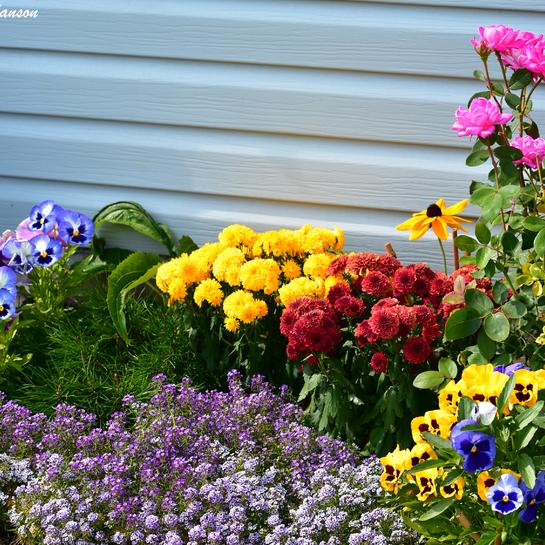 Garden flowers Cornwall, ON