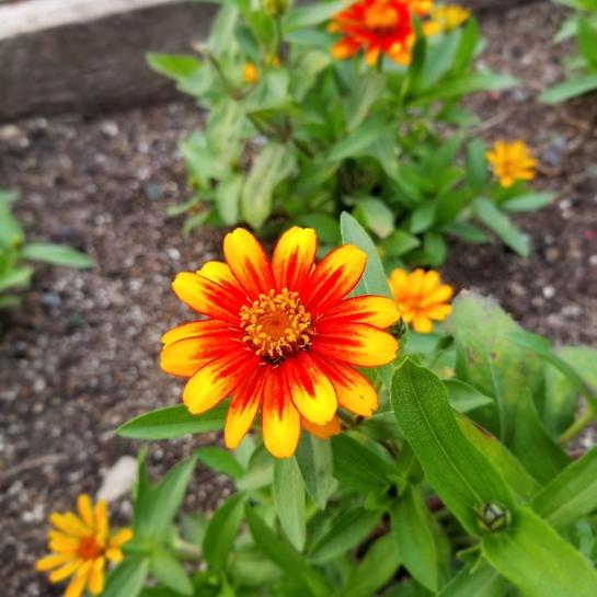 lovely flowers Assiniboine Park, MB