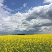 Canola Time