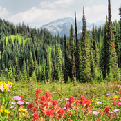 Meadows in the Sky, Mt. Revelstoke