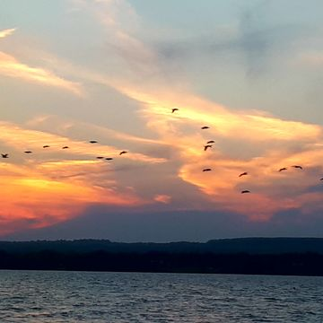 birds in the sky at sunset time