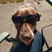 Bailey enjoying the eclipse today!