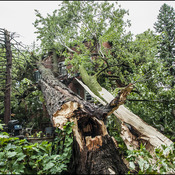 Devastating storm snaps trees, leaves 57,000 without power in Montreal