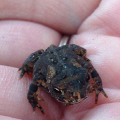 Cutest little toad ever!