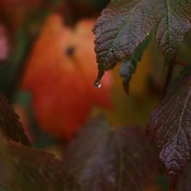 Drops of fall