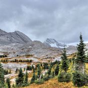 Larch season on Burstall Pass