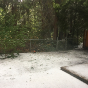 Coquitlam backyard after hailed