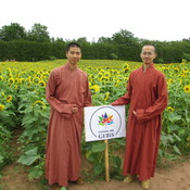 MONKS SUNFLOWER GARDEN