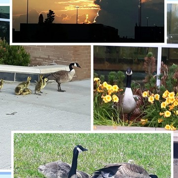 L.A. start to my day. MY 5 a.m. workouts and goodbye wishes from the geese!!