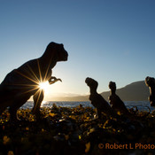 T.rex family sunset