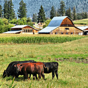 North Okanagan Farm