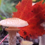 The great canadian Fungi!
