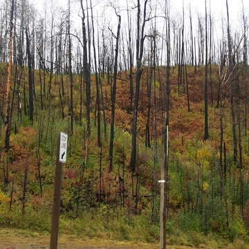 Fall colors against the scorched trees