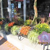Fall display outside hair salon in Orillia