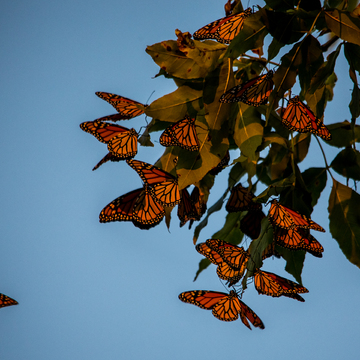 Monarch Butterfly Hotel