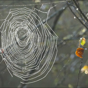 Morning web, Elliot Lake.