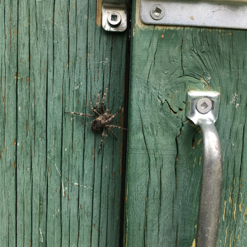Outhouse Visitor!!
