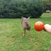 Is that a Cherry Tomato I smell?