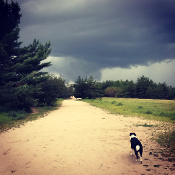 Storm LOOMING