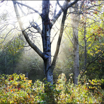 The morning sun, Elliot Lake.