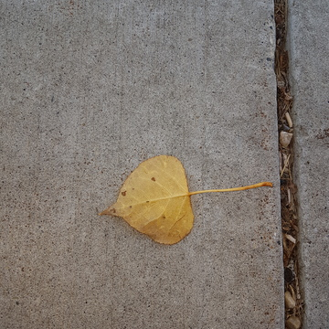 single leaf on a fall day