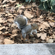 What a cute little squirrel!