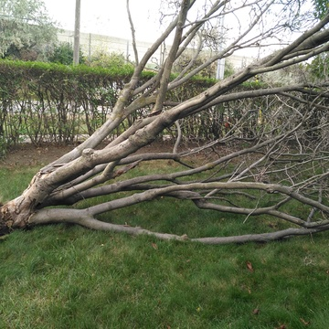 Damage from the windstorm