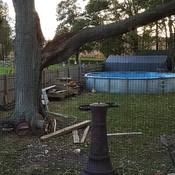 wind damage.