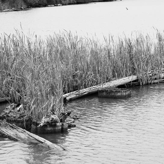 Nice Grass Westham Island, Delta, BC