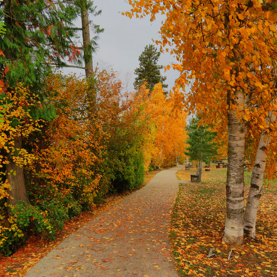 The River Walk Enderby, BC
