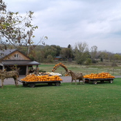 Fall Display at Willow Creek Farms