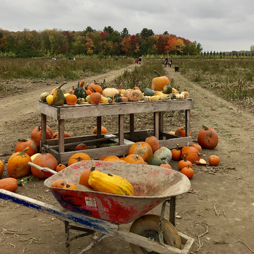 Pumpkin picking season