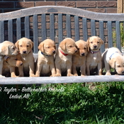 Remembering Successful TCI Litter