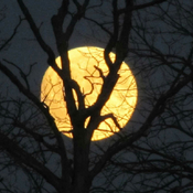 Fall full moon