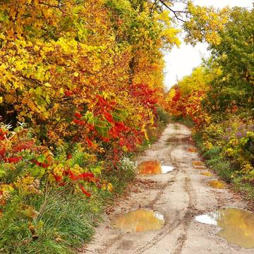 Fall on old road