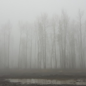 Freezing Fog Trees