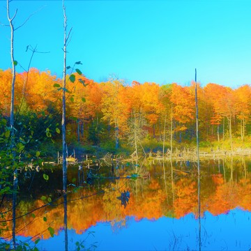 Autumn reflections in a pond in Gatineau park