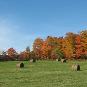Fall Pictures in Disraeli, Qc.