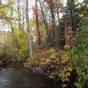 mcvikar creek in the fall
