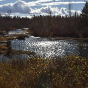 Fish creek