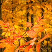 Golden Autumn Weekend