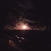 Moonrise through the trees.
