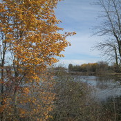 Autumn along Rideau River near Burritts Rapids